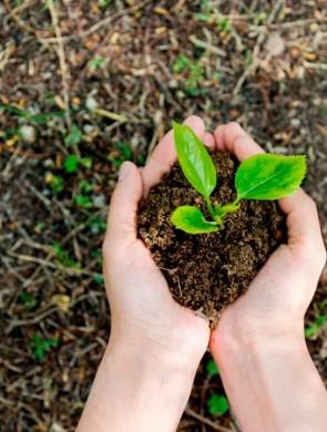 Alunos plantam árvores nativas em escolas de Joinville